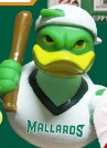 rubber duck - madison mallards - northwoods league